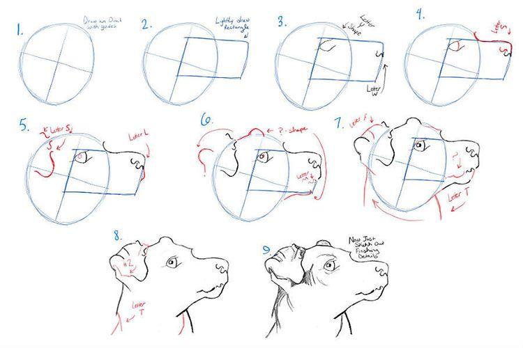 Этапы рисования