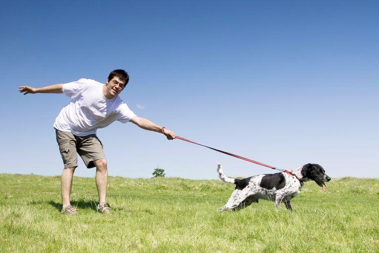 Собака тянет поводок