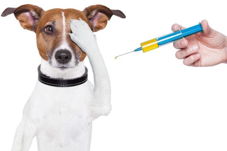 Иньекция собаке