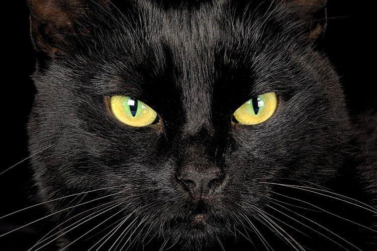 Желтые нлаза черной кошки