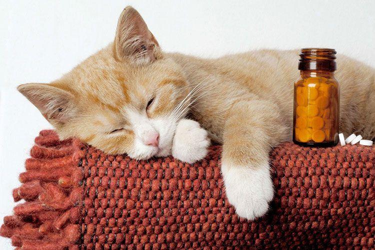 Рыжий кот и таблетки