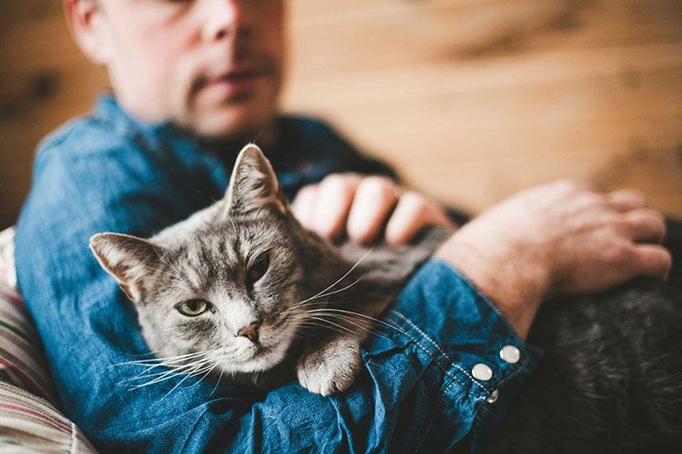 Серый кот и хозяин