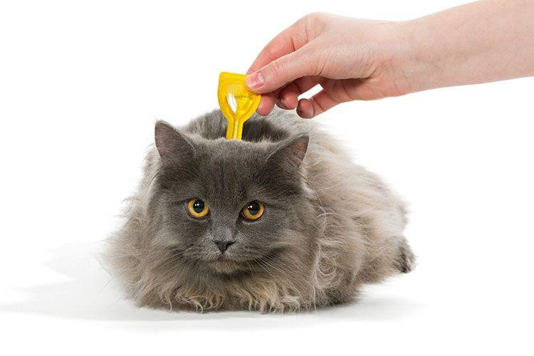 Серый кот и капли на холку