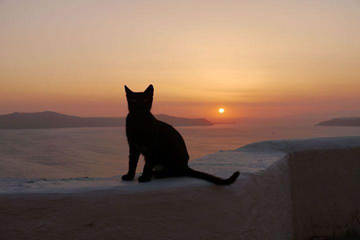 Кот и закат