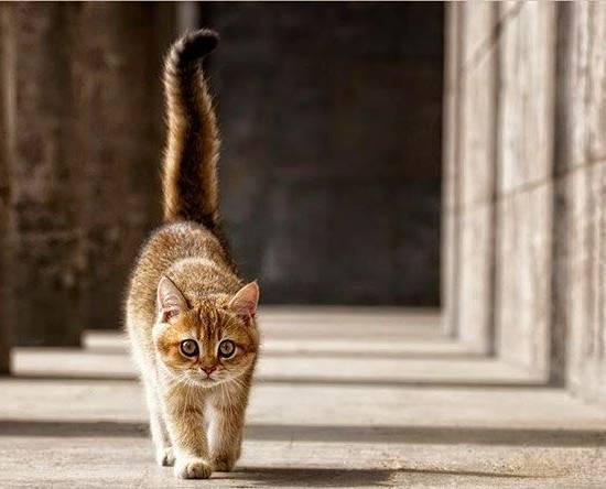 Кот возвращается
