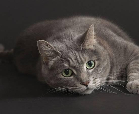 Серая кошка с зелеными глазами