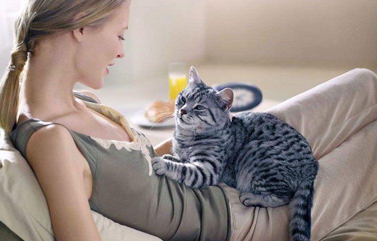 Молочный кошачий шаг