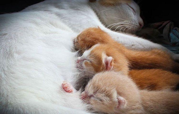Рыжие котята с мамой