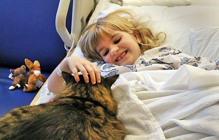Кошка с заболевшей девочкой