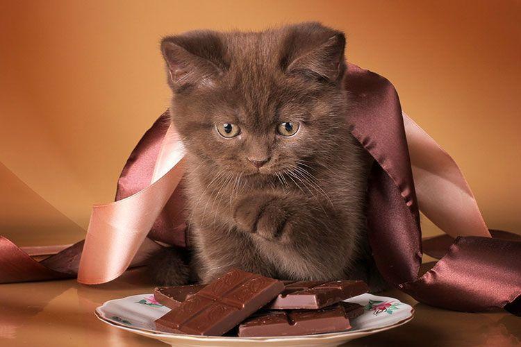 Котенок и шоколад