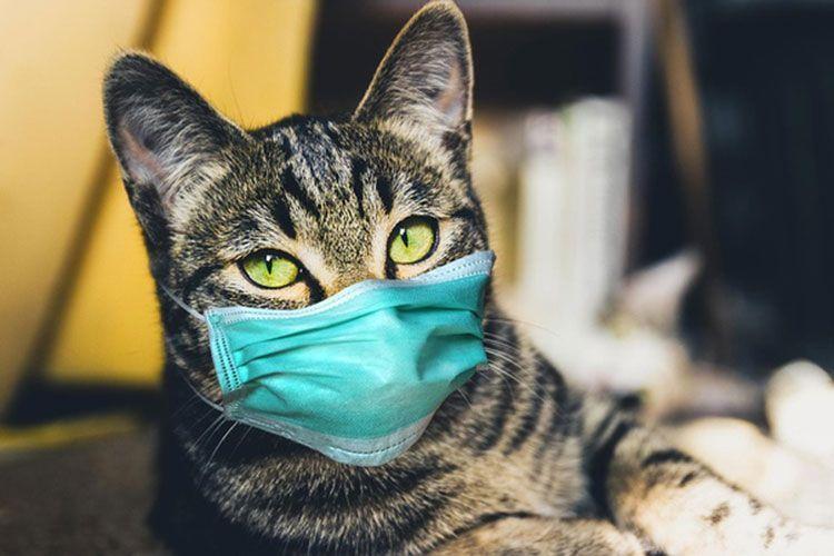 Полосатая кошка в маске