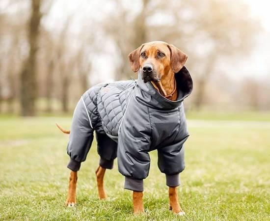 Как сшить собаке комбинезон