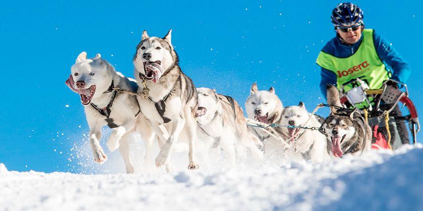 Спорт с собаками