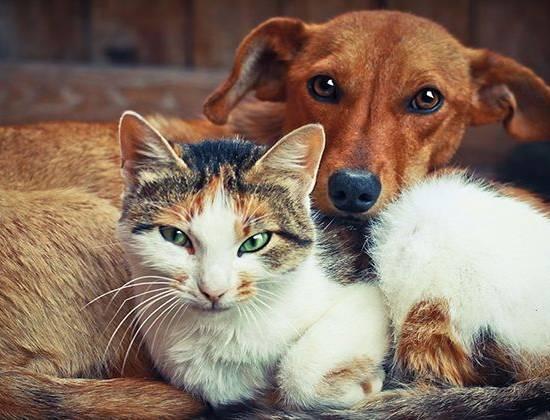 Регистрация кошек и собак в России