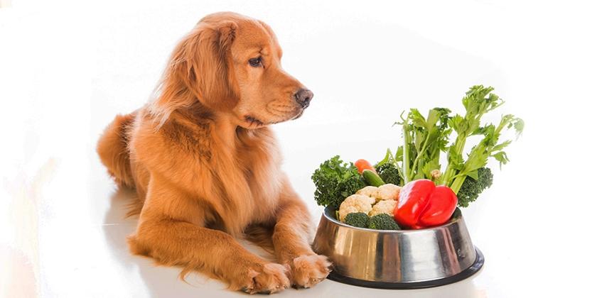 Овощи и зелень собакам