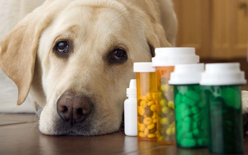 Препараты для собак с хондроитином