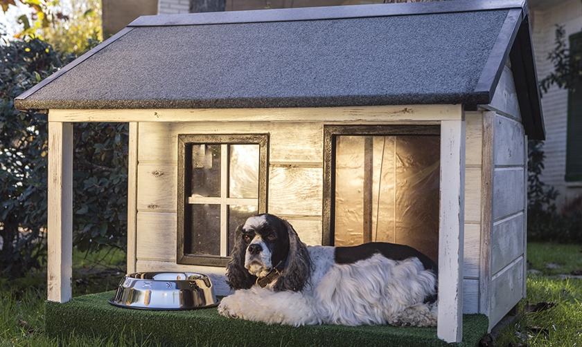 Собака возле будки
