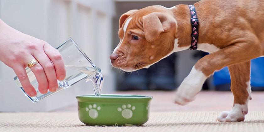 Вода собаке