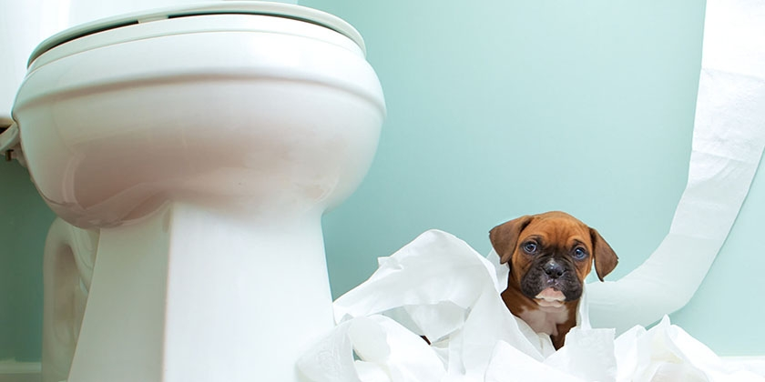 Собака в туалете