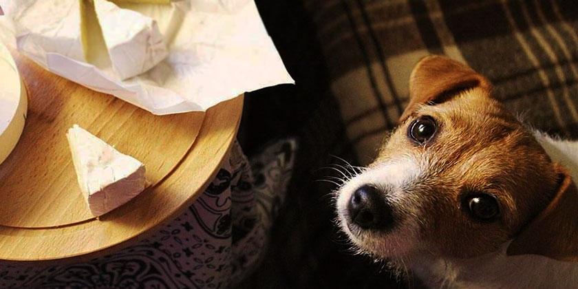 Сыры с плесенью и собака
