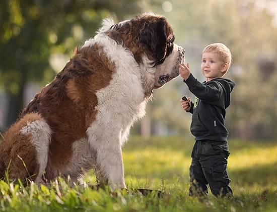 Самая тяжелая собака в мире