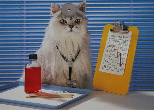 Каким образом кошки лечат болезни людей