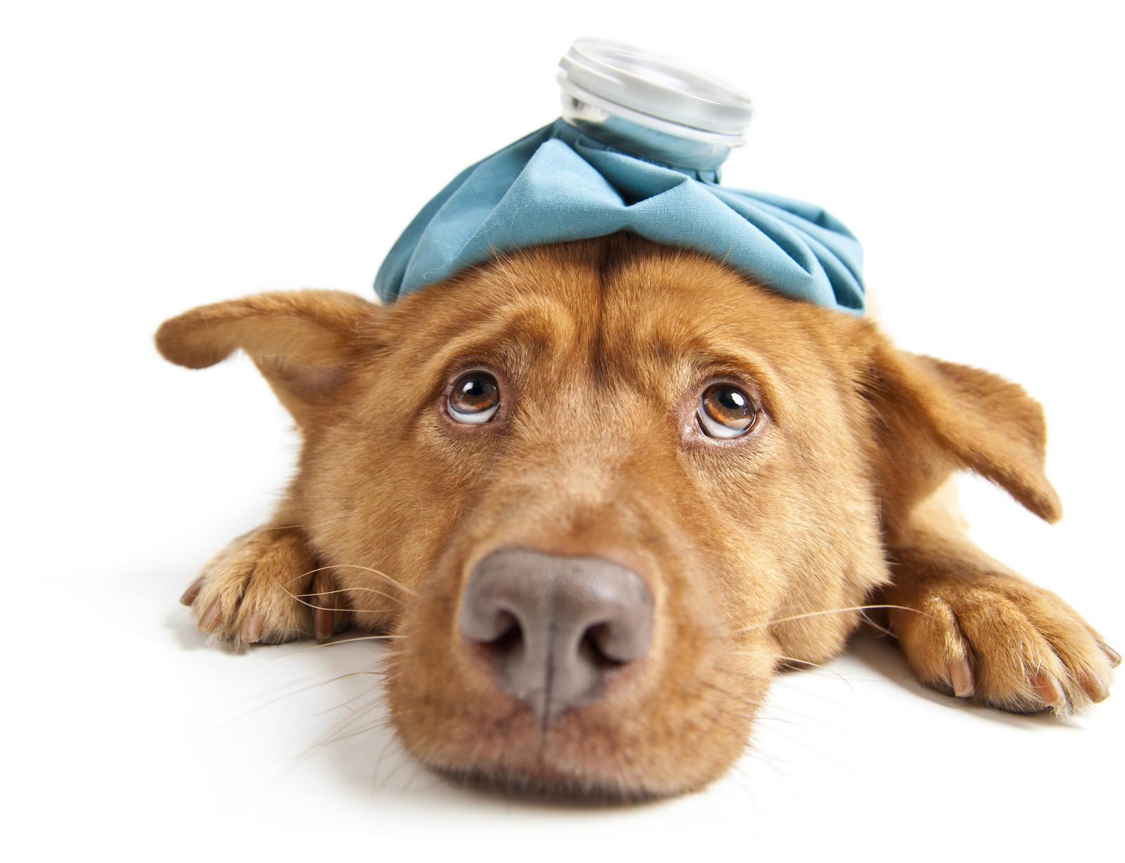 У щенка режутся зубы симптомы понос