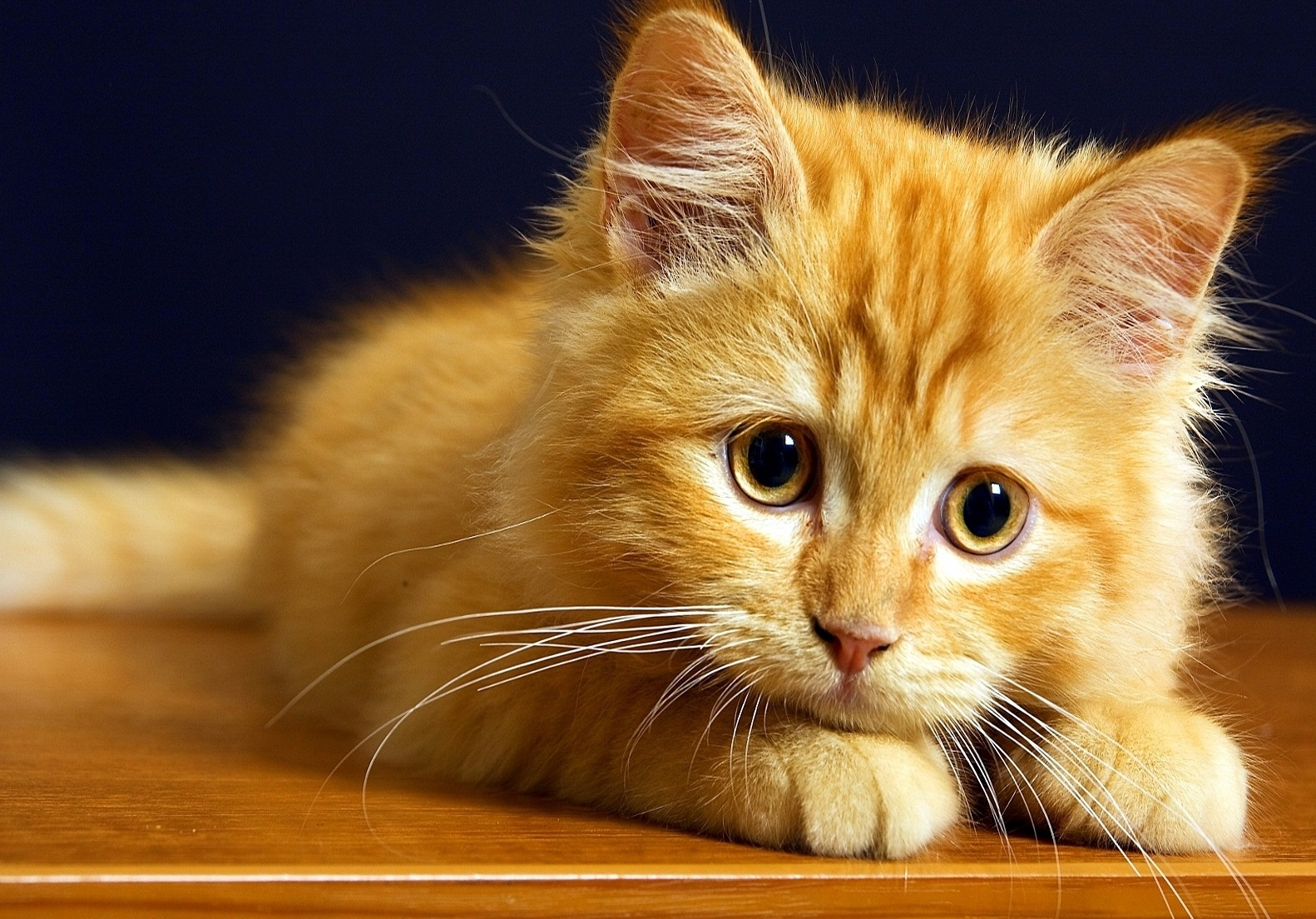 Панлейкопения у кошек симптомы опасность для человека