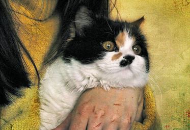 Болезнь кошачьей царапины фелиноз