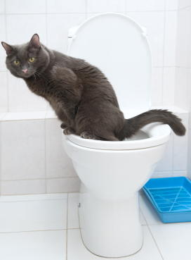 Проблема с дефекацией у кота