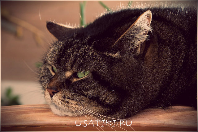 Геморрагический цистит у кошек