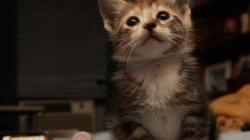 Через сколько проходит цистит у котов