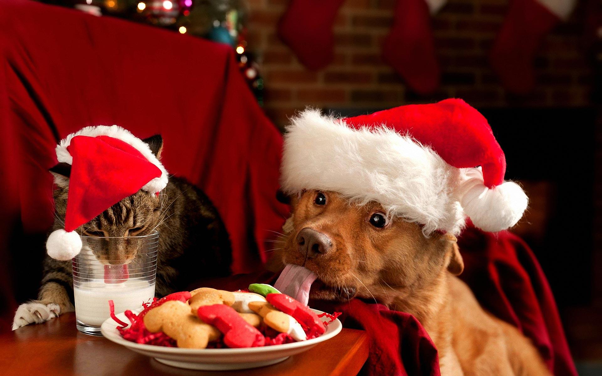 животные и новый год фото надо