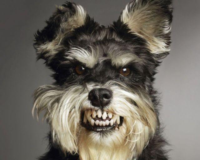 Выравнивание зубов у собак