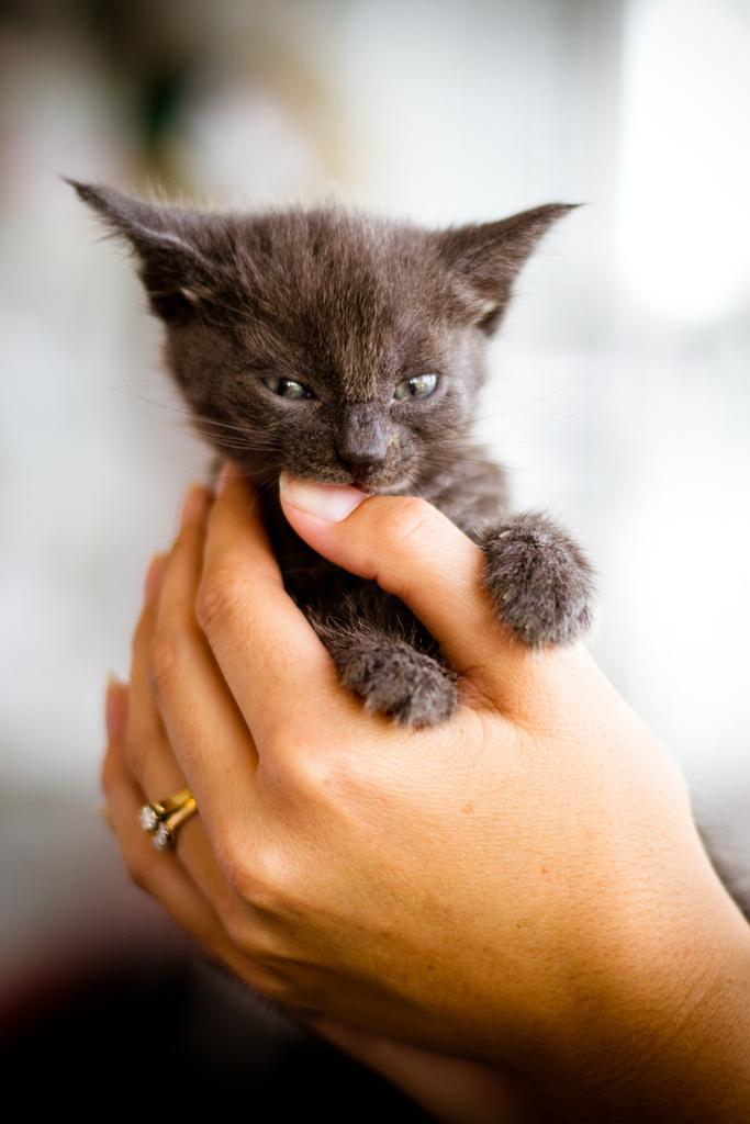 Как быстро отучить кота кусаться и что делать при укусе