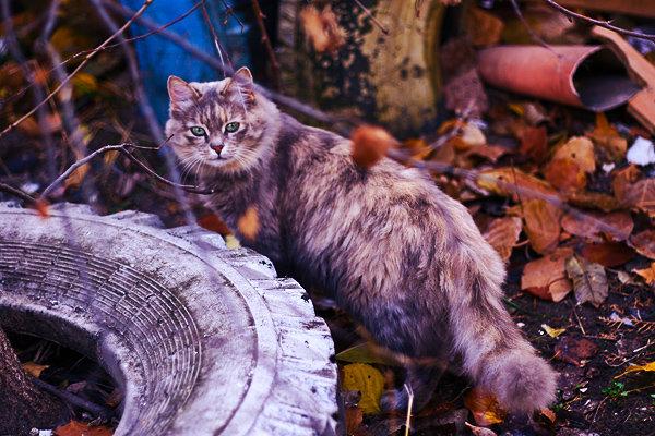 Пропал кот – что делать? — Кот Обормот