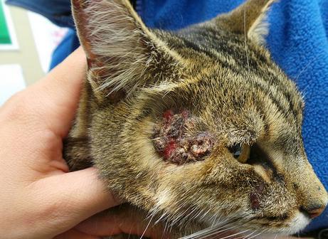 Гормональные нарушения у кота