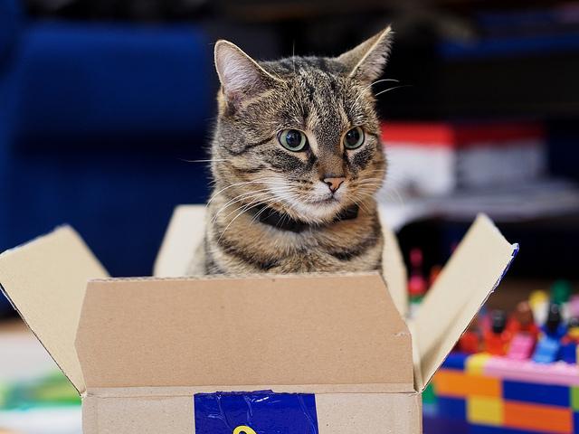 Кошка и коробки