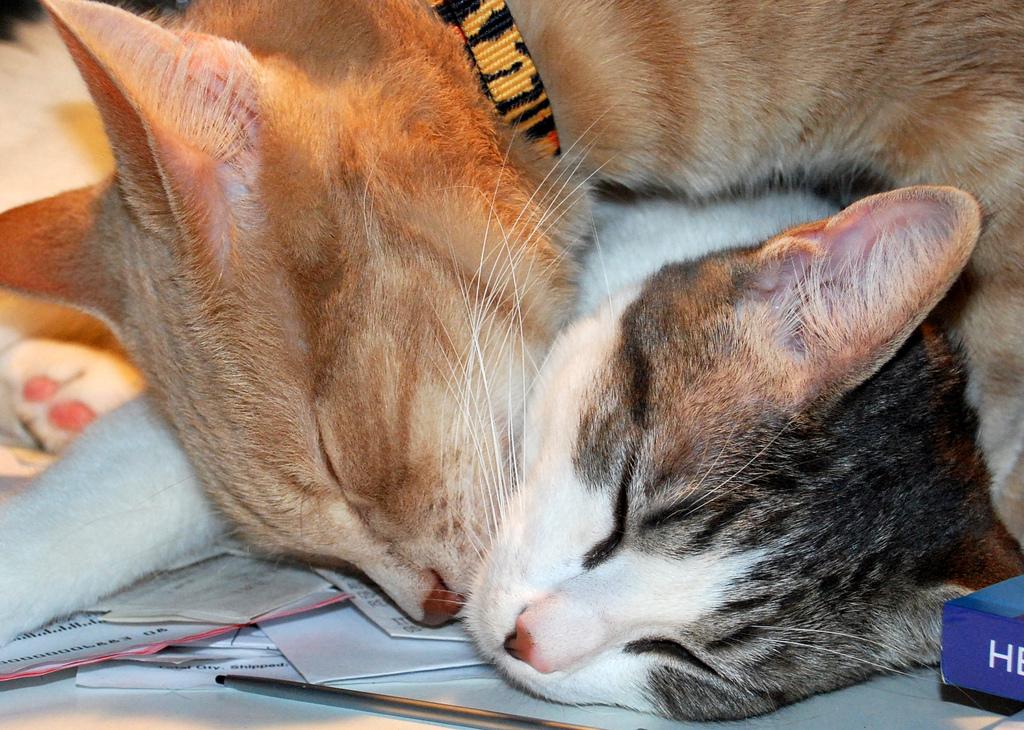 Кот и кошка спят в обнимку