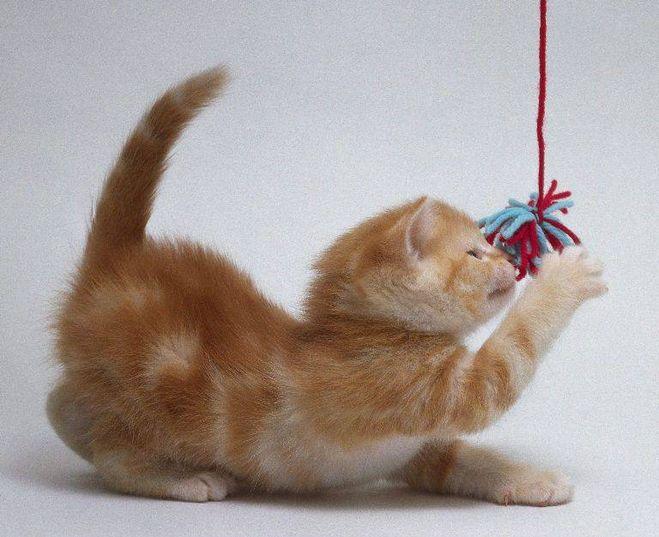 игры с кошкой