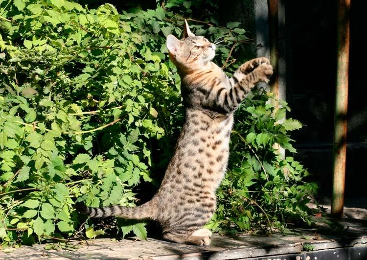 Серенгети гуляет на улице