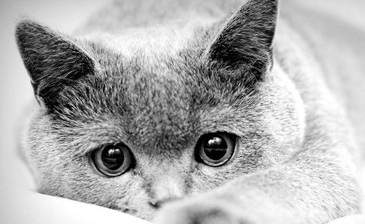 Кошка с грустными глазами