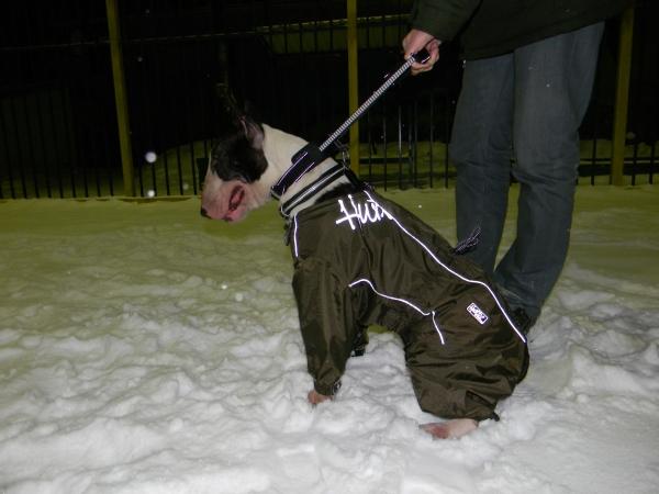 Поводок водилка для собаки