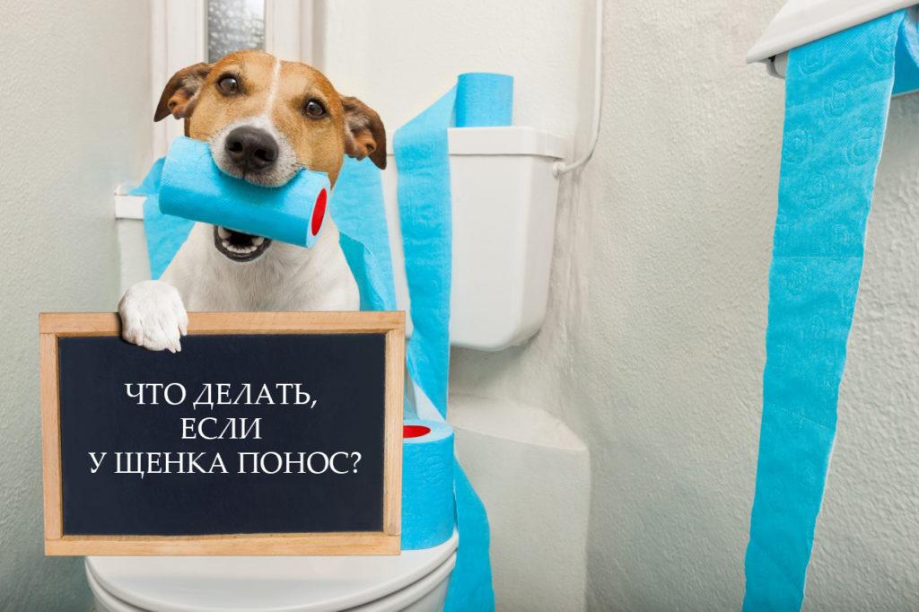 Понос у щенка - что делать?