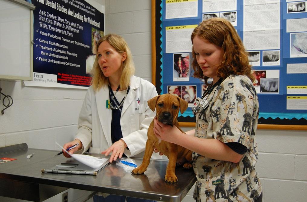 Прививки щенкам до года