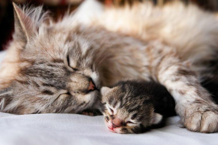 Кошка родила котенка