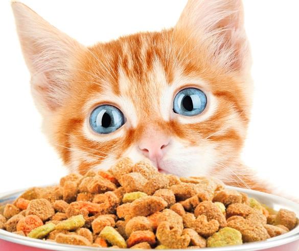 Чем кормить взрослого кота в домашних условиях 101