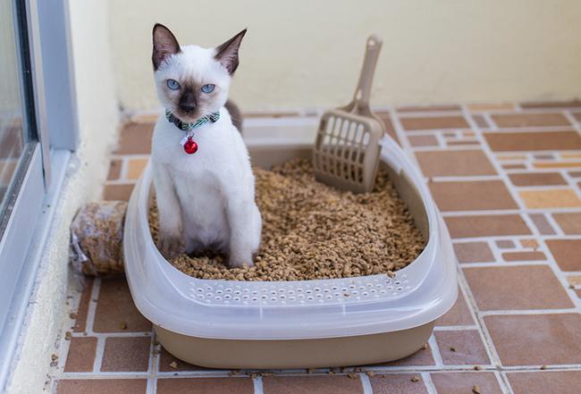 Открытый кошачий туалет с наполнителем