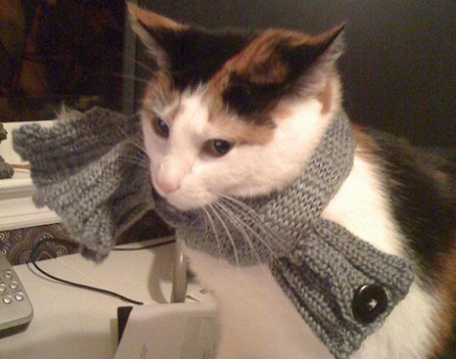ProPlan (Проплан) для кошек купить в Ростове-на-Дону