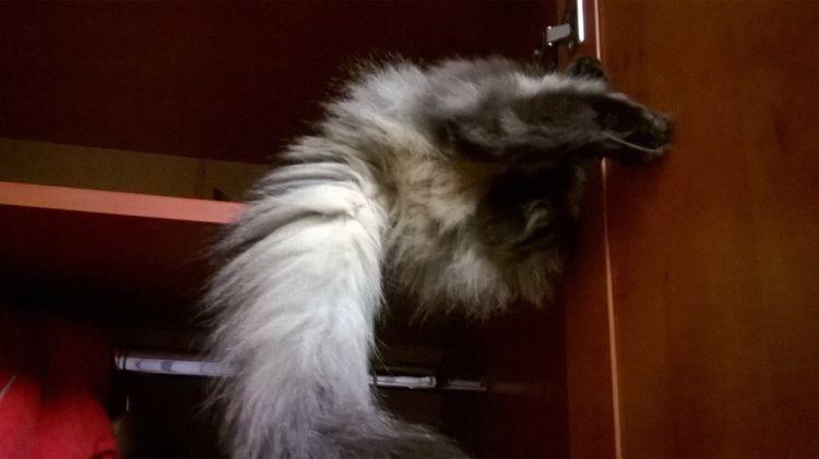 Кошка спряталась в шкафу